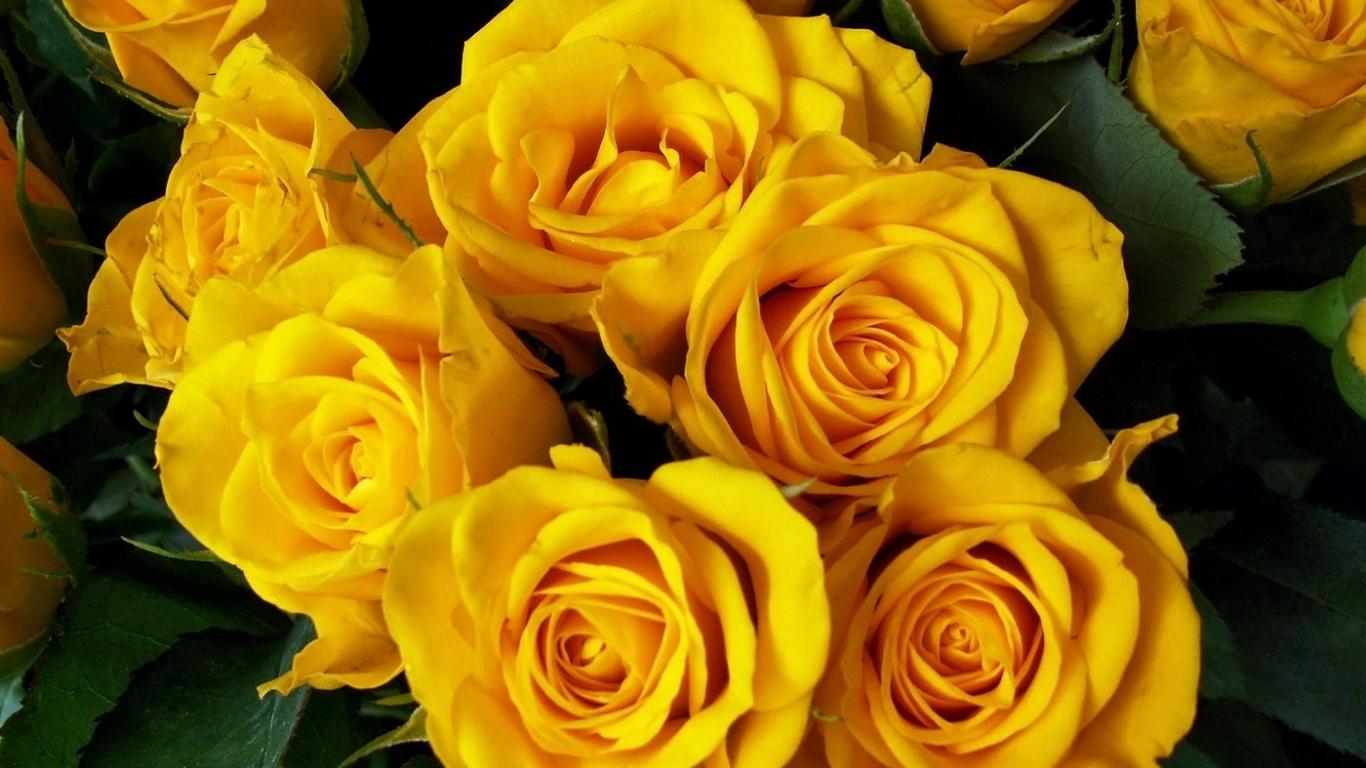 Yellow flower hd wallpaper 1 high resolution wallpaper - Yellow rose images hd ...