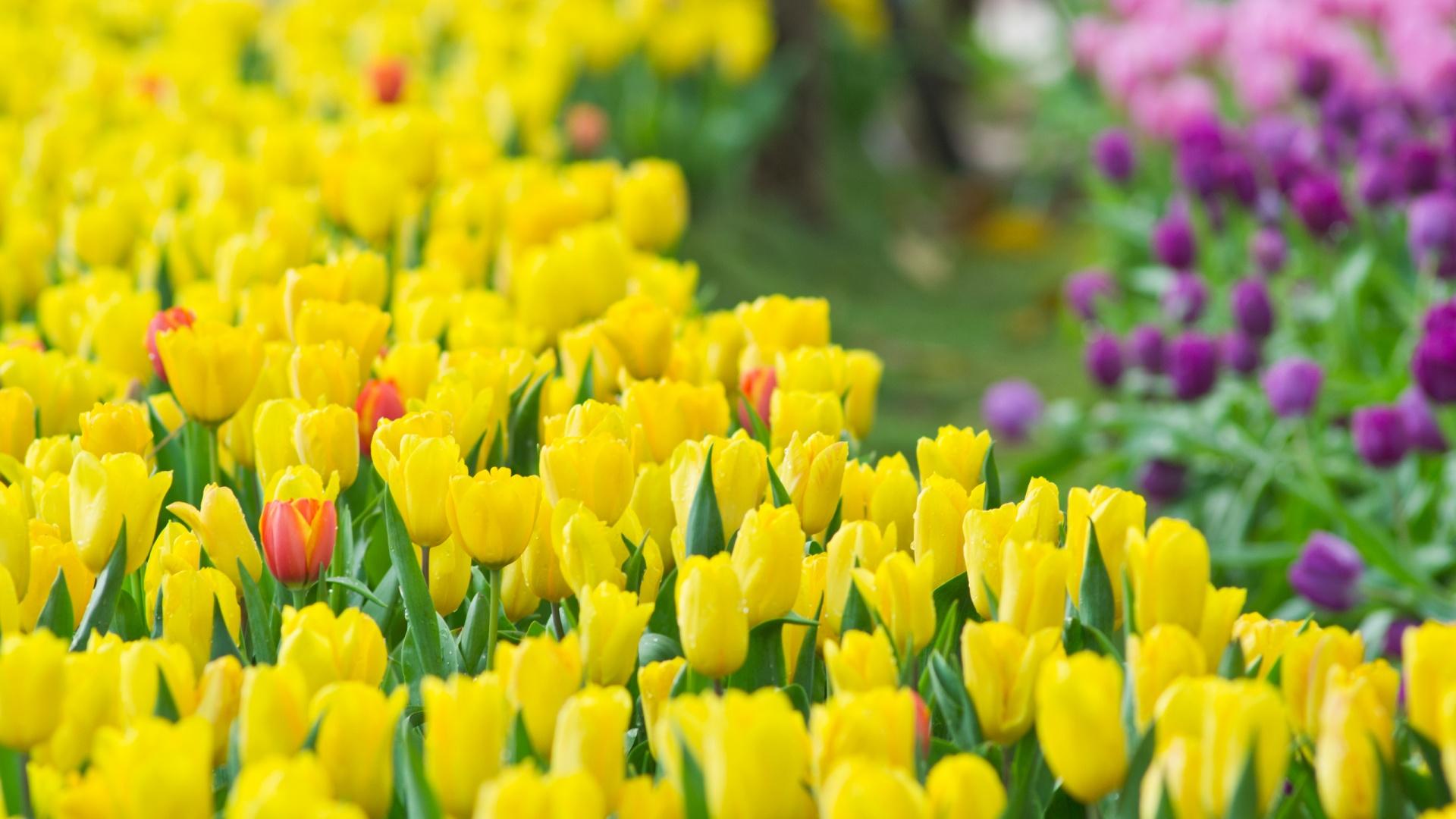 Yellow Flower Hd Wallpaper Free