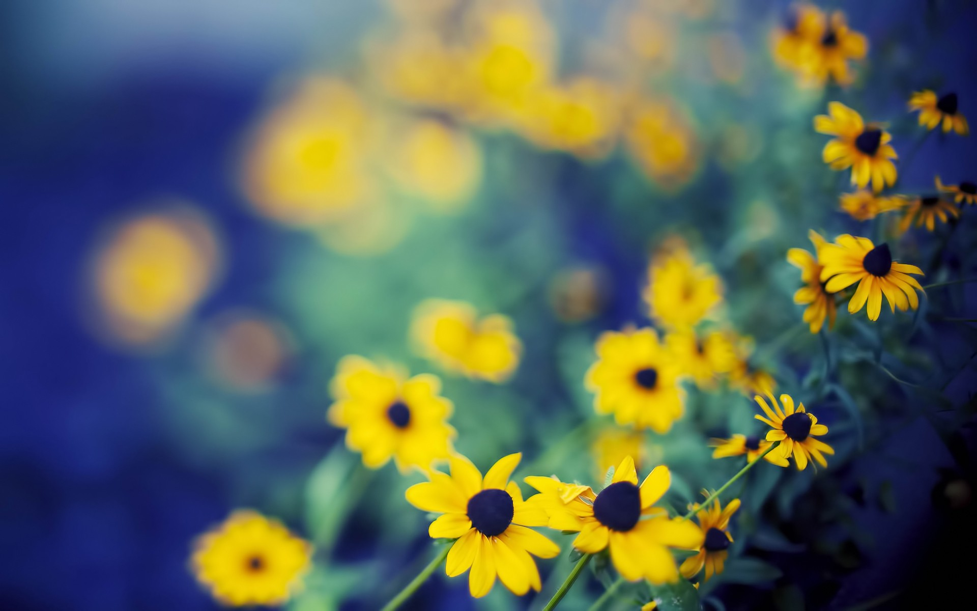 Yellow Flower Hd Wallpaper HD