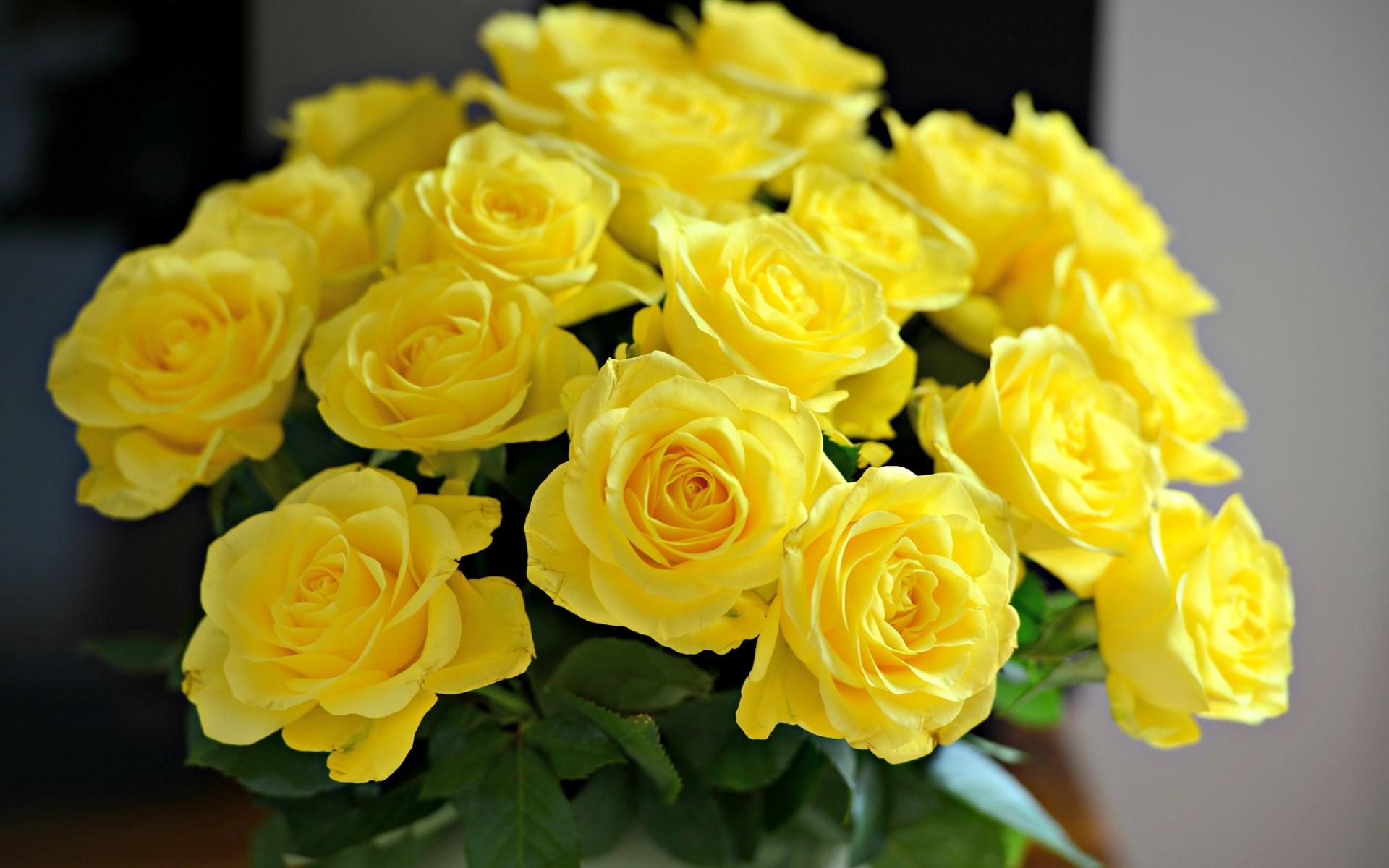 Hd wallpaper yellow rose - Yellow Rose Wallpaper Hd Wallpaper