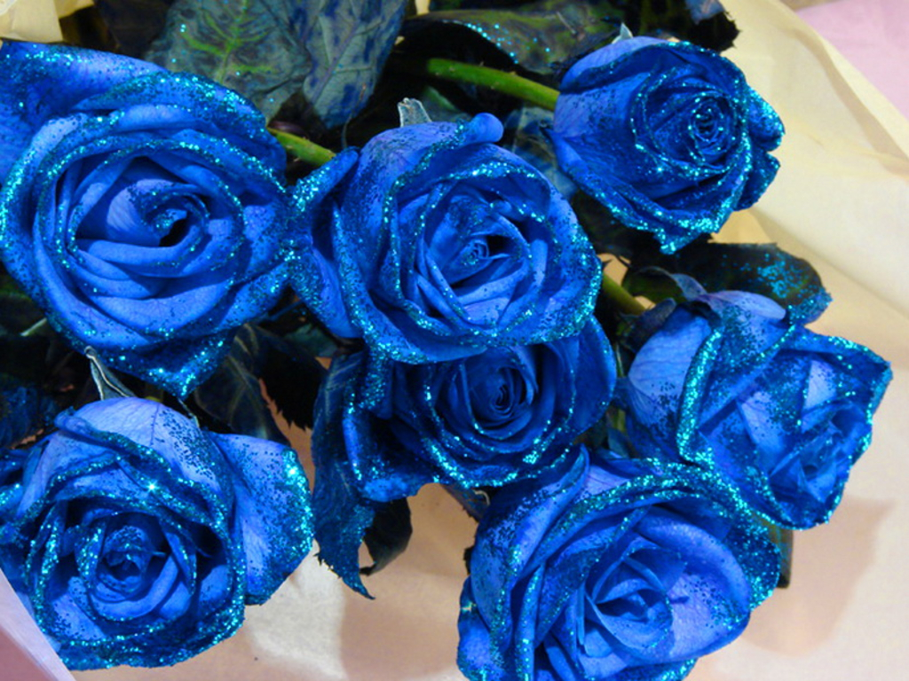Blue Rose Flowers 8 Desktop Background