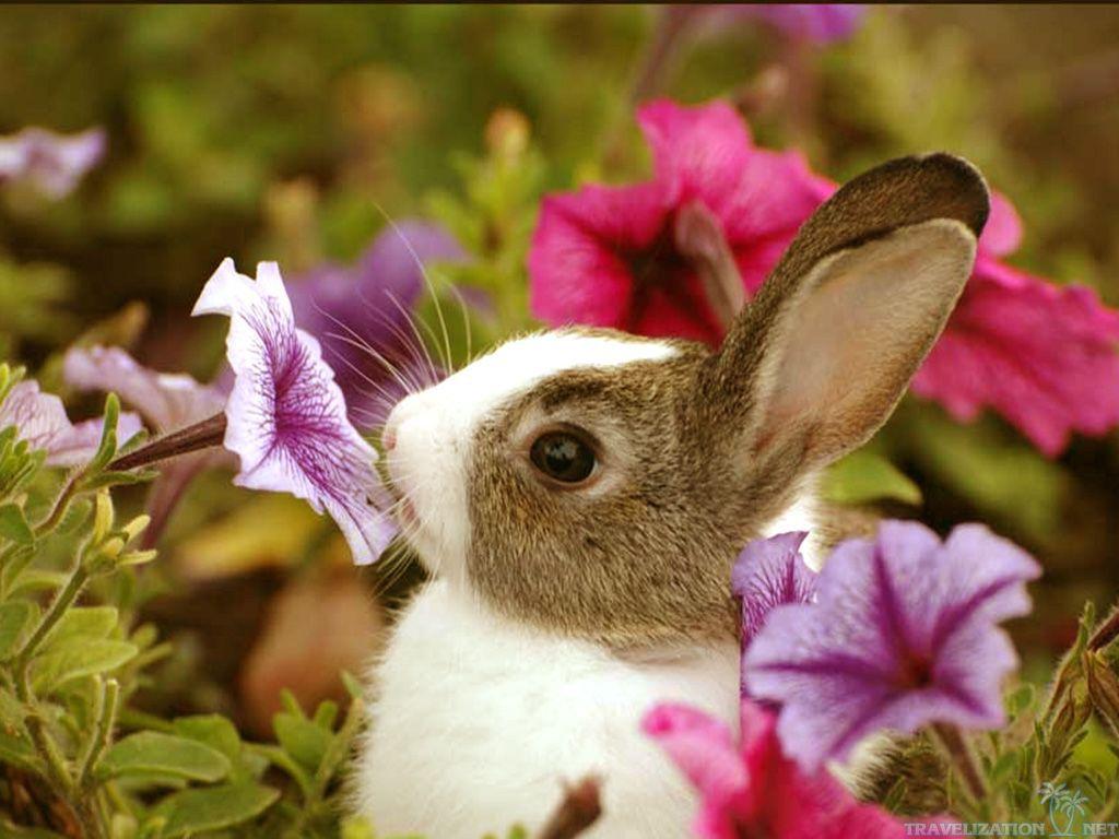 cute flower wallpapers 1 widescreen wallpaper - hdflowerwallpaper