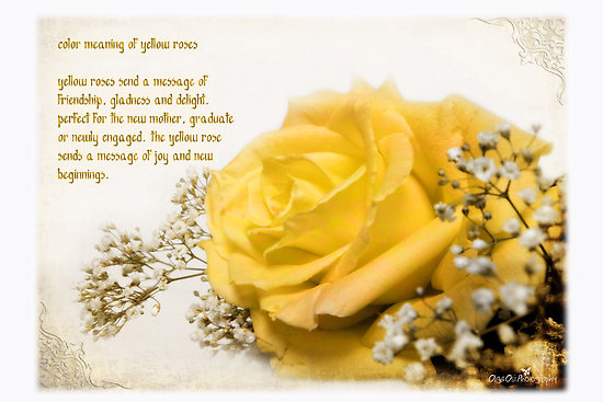 Flower meaning yellow rose 11 high resolution wallpaper flower meaning yellow rose free wallpaper mightylinksfo Gallery