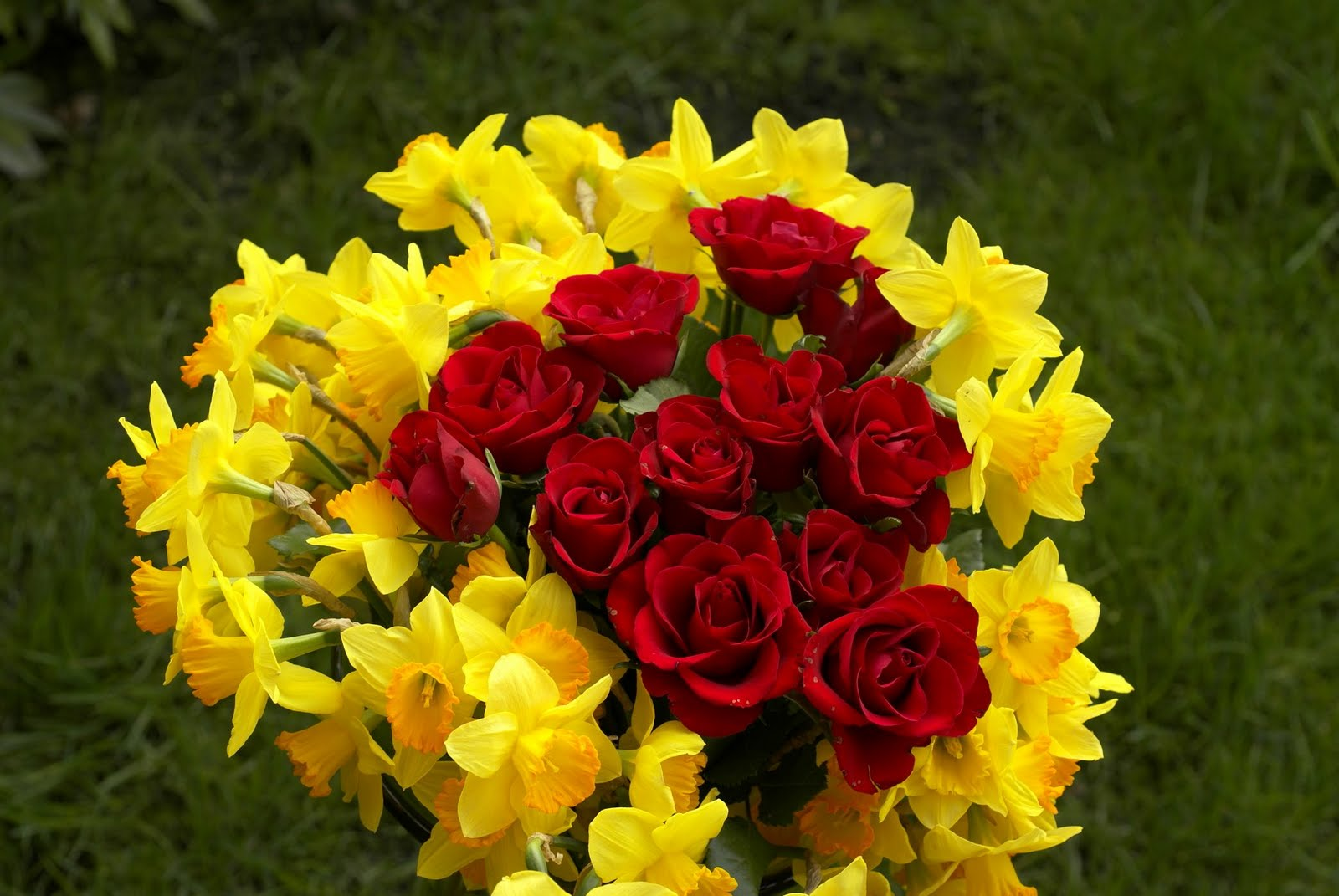Picture Flower Rose Red Yellow 7 Wide Wallpaper Hdflowerwallpaper