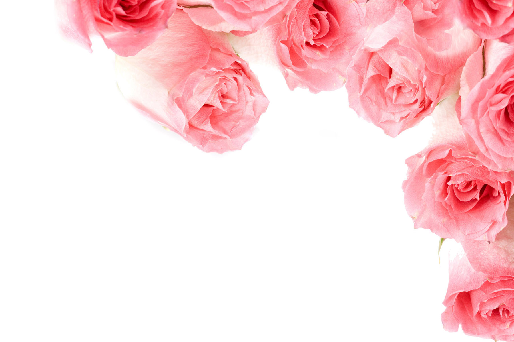 Pink rose flowers images 18 widescreen wallpaper hdflowerwallpaper pink rose flowers images 18 widescreen wallpaper mightylinksfo Choice Image