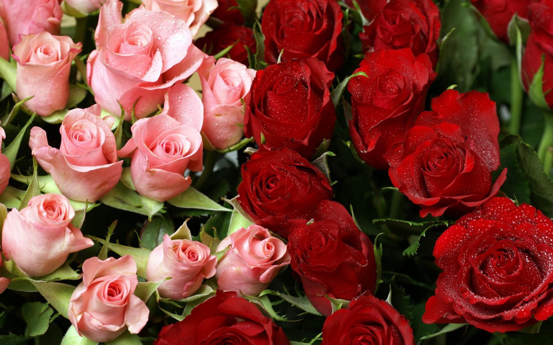 Red Flower Bouquet 5 Free Hd Wallpaper - HdFlowerWallpaper.com