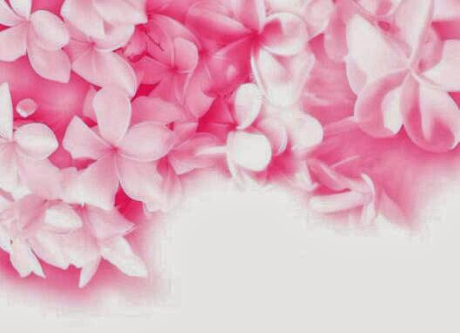 types of pink flowers 21 free hd wallpaper