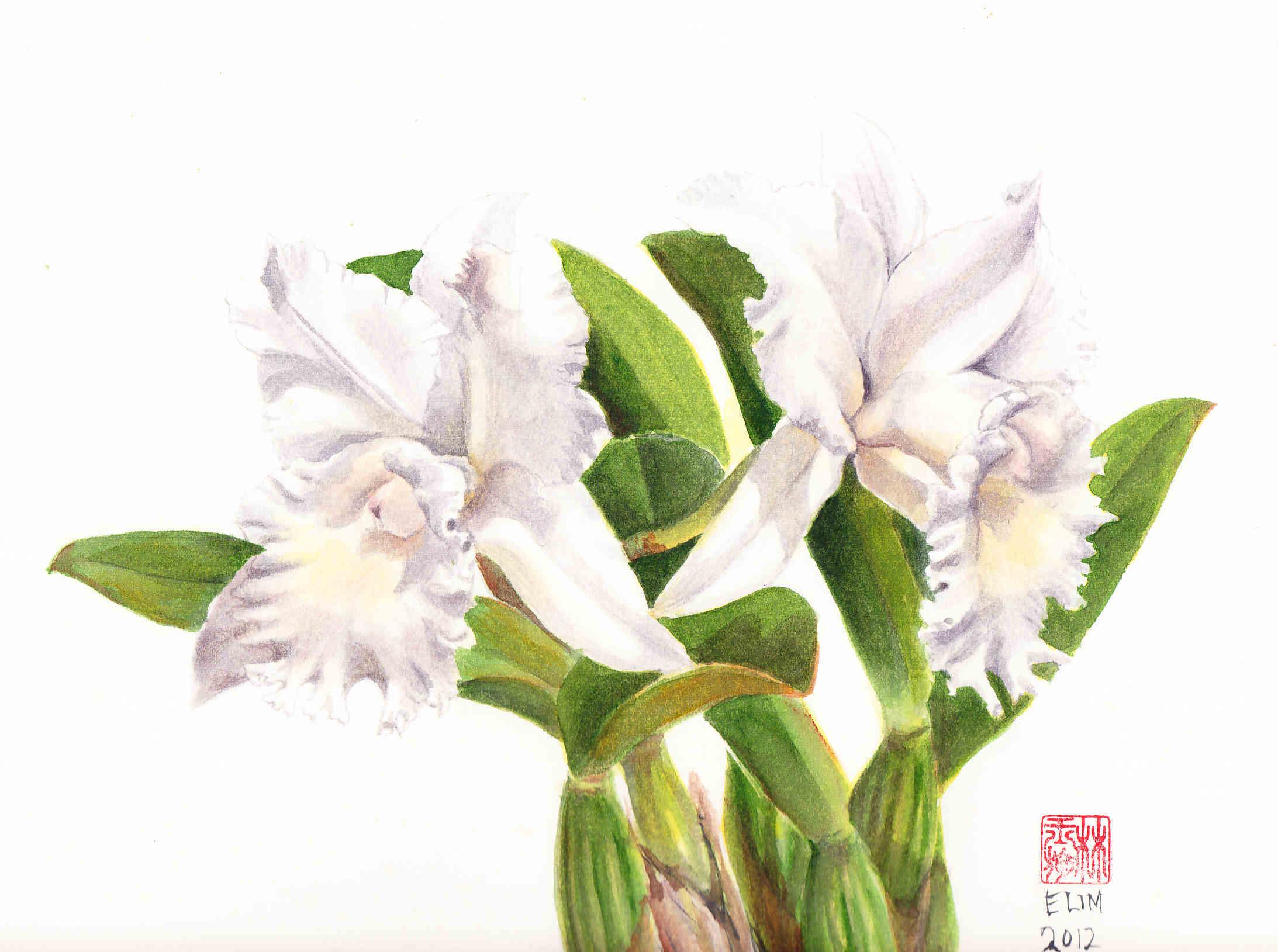White Flowers Chinese 19 Background Hdflowerwallpaper