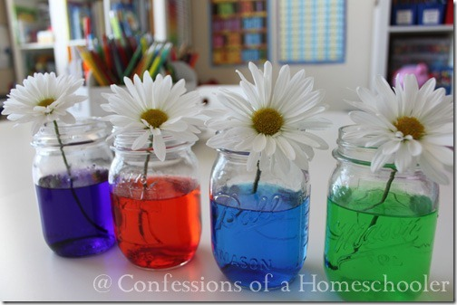 why do flowers change color | Flower Inspiration