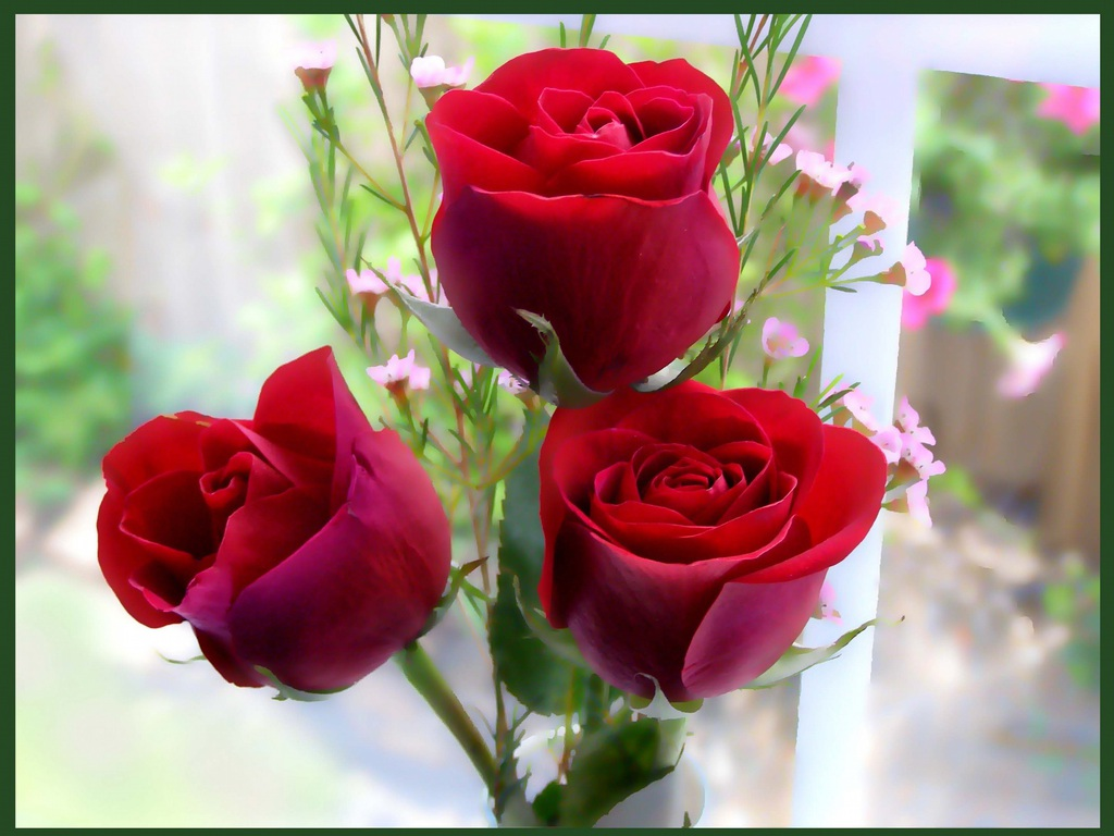 Flower Size Wiki Mersnoforum