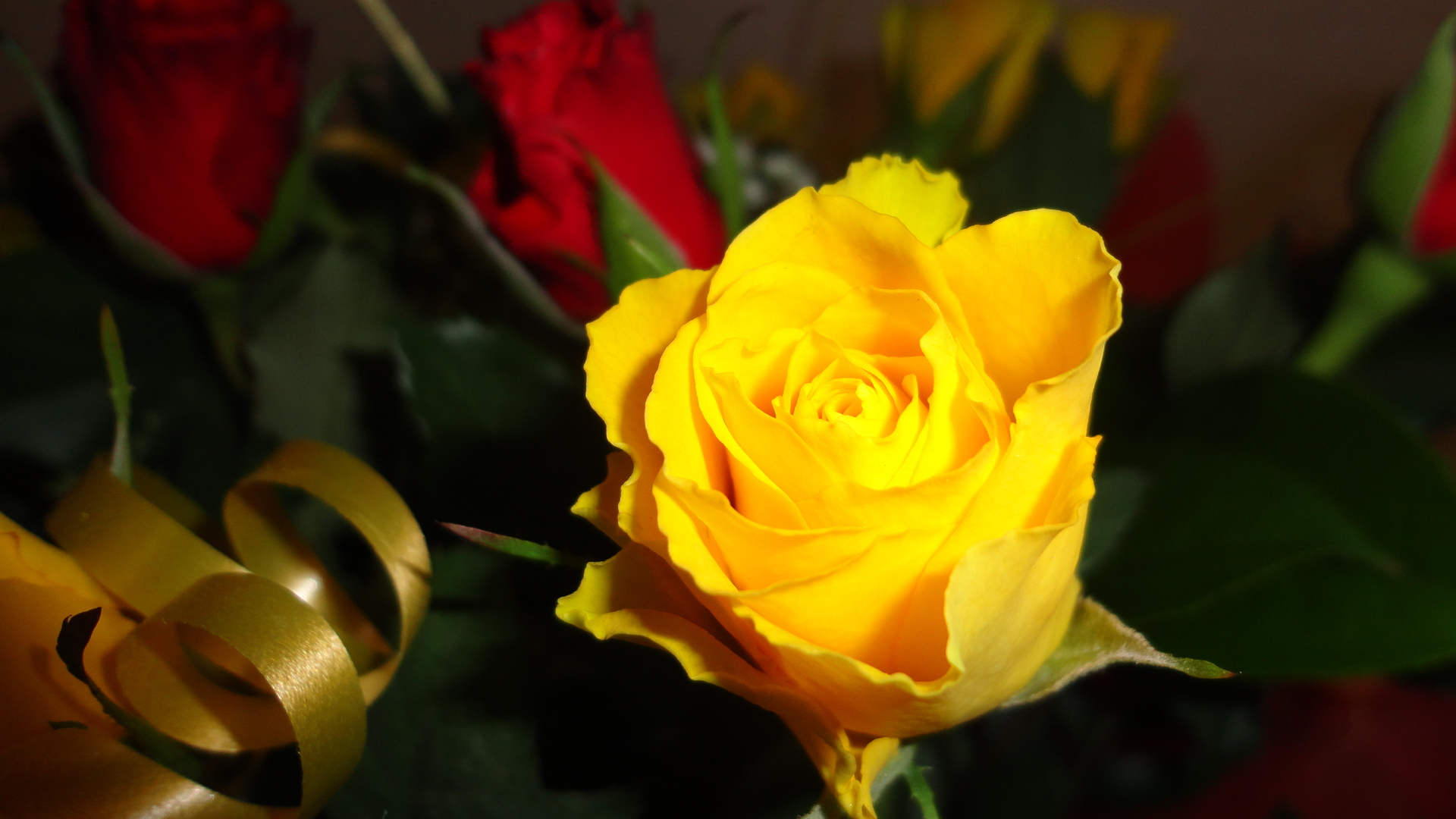 Yellow Rose Flowers Images 2 Desktop Background Hdflowerwallpaper