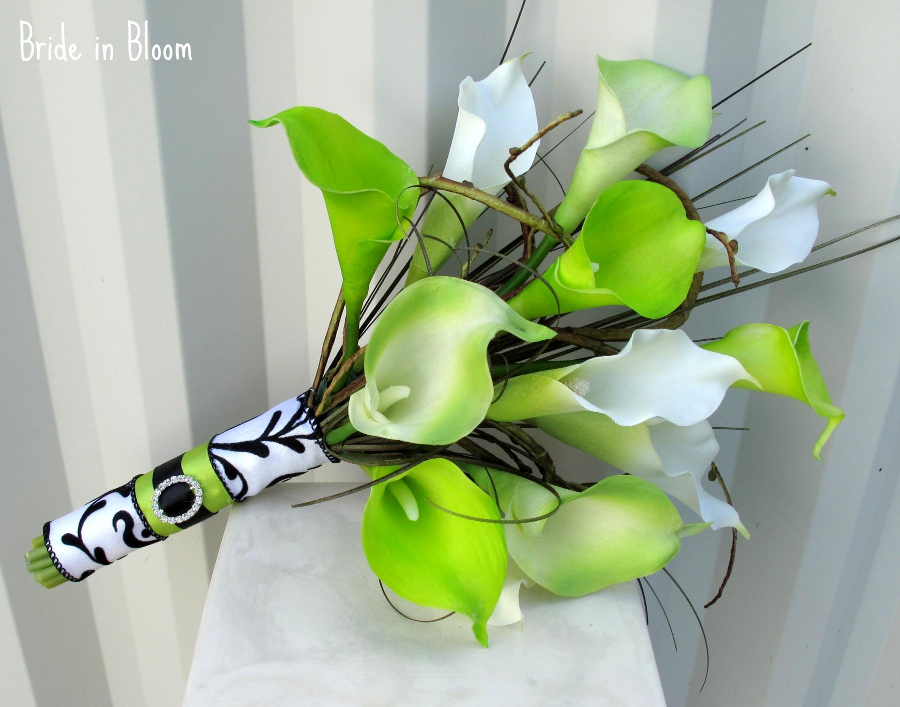 Зеленые каллы цветы фото