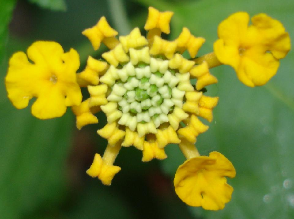 Small yellow flowers 23 high resolution wallpaper small yellow flowers hd wallpaper mightylinksfo