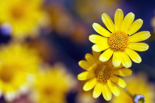 Small yellow flowers 34 high resolution wallpaper small yellow flowers free wallpaper mightylinksfo