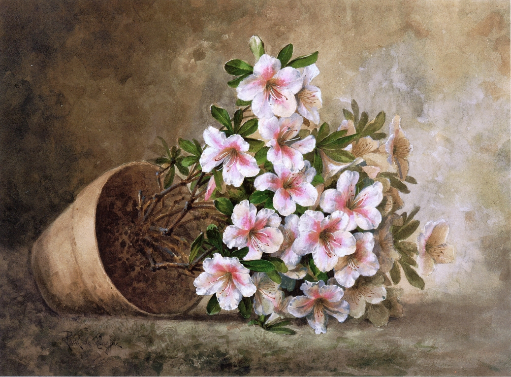 White Flowers Paintings 11 Background Hdflowerwallpaper
