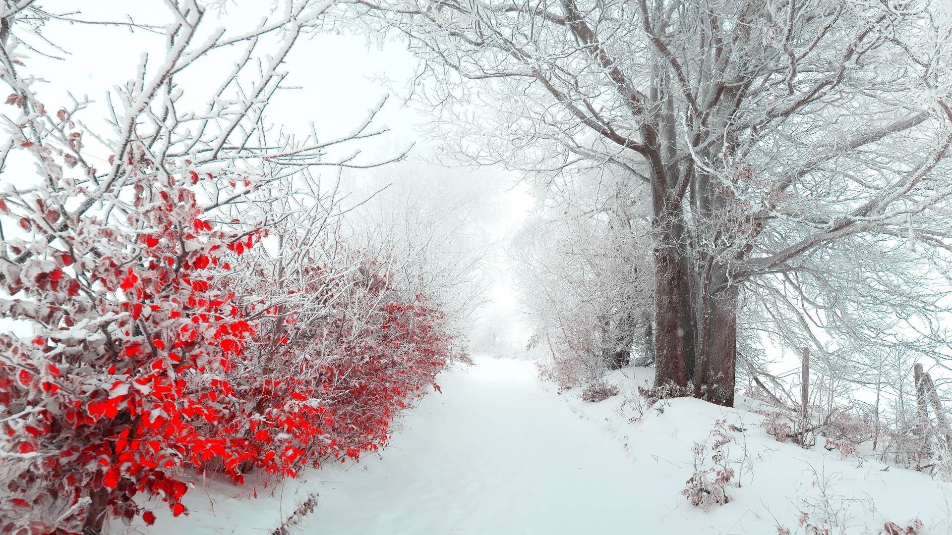 winter flower  wide wallpaper  hdflowerwallpaper, Beautiful flower
