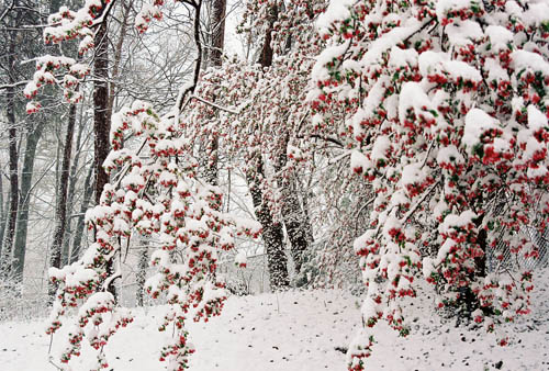 winter flower  cool wallpaper  hdflowerwallpaper, Beautiful flower