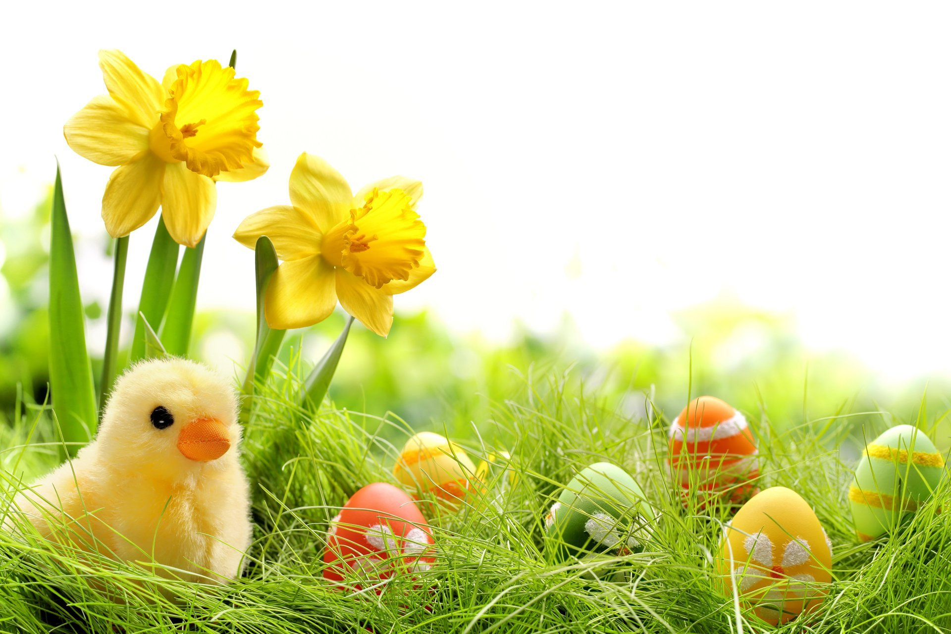 easter flower 19 free wallpaper hdflowerwallpaper com