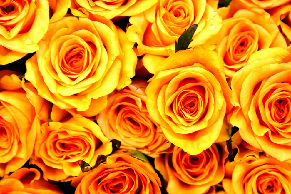 Yellow Flowers Meaning 2 Hd Wallpaper Hdflowerwallpaper
