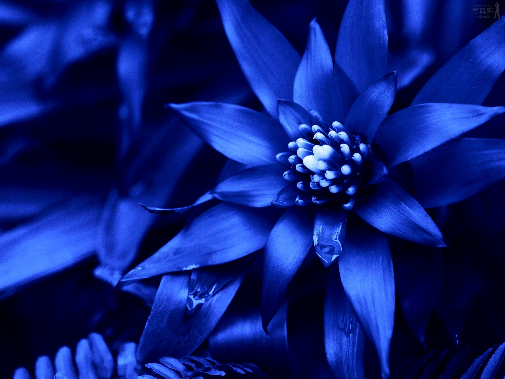 Blue Flowers Available In October 31 Hd Wallpaper