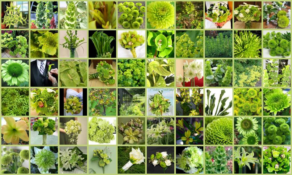 Green Flowers Names 10 High Resolution Wallpaper ...