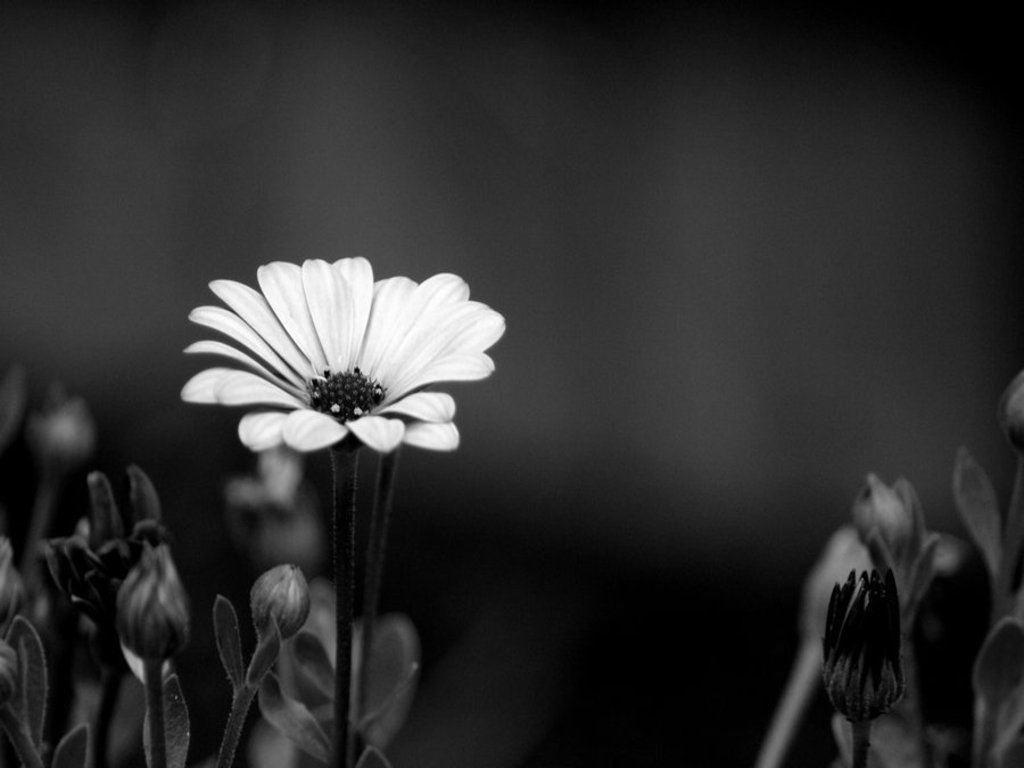 Black And White Floral Wallpaper 8 Background Wallpaper