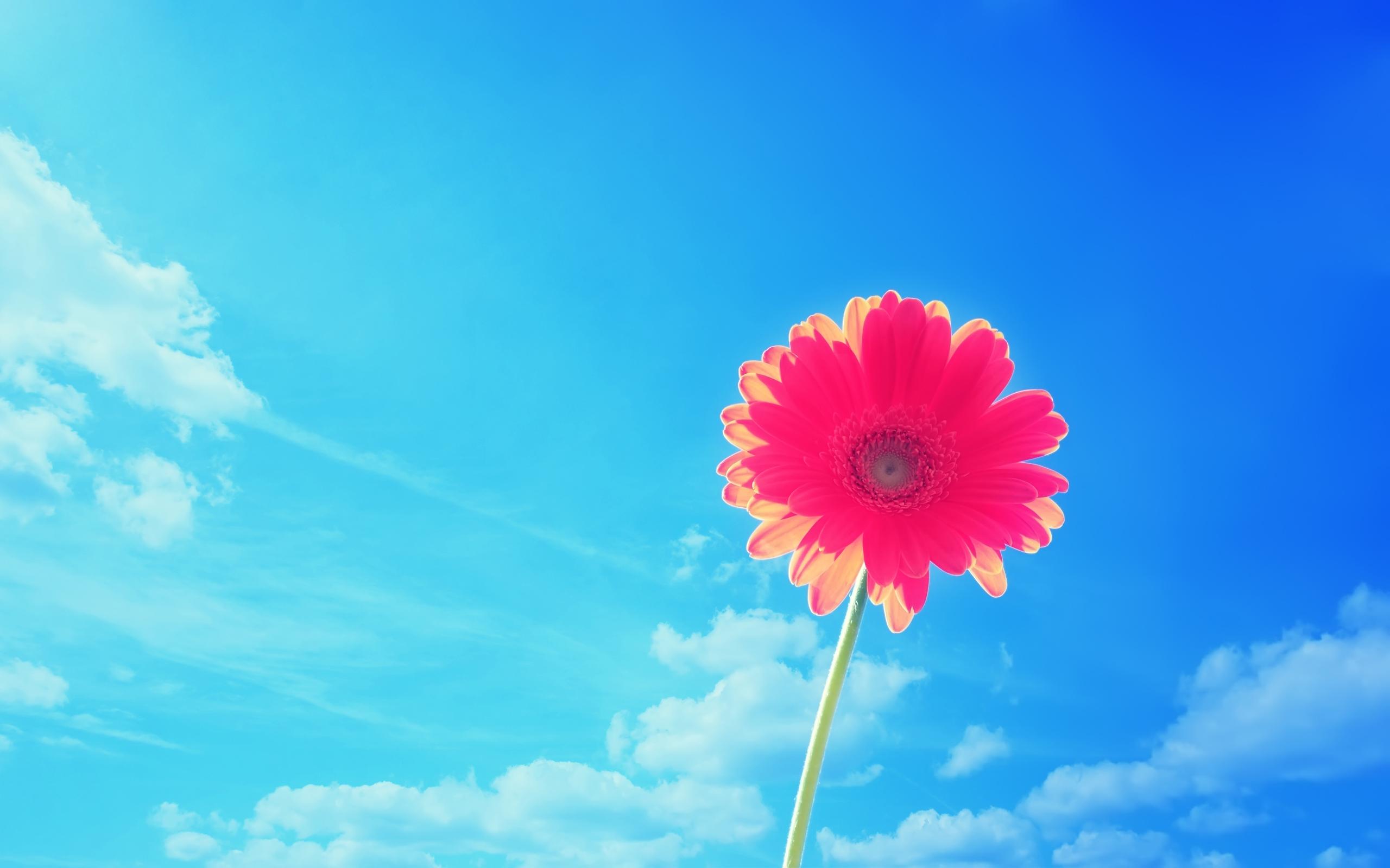pink flowers desktop wallpaper hd wallpaper