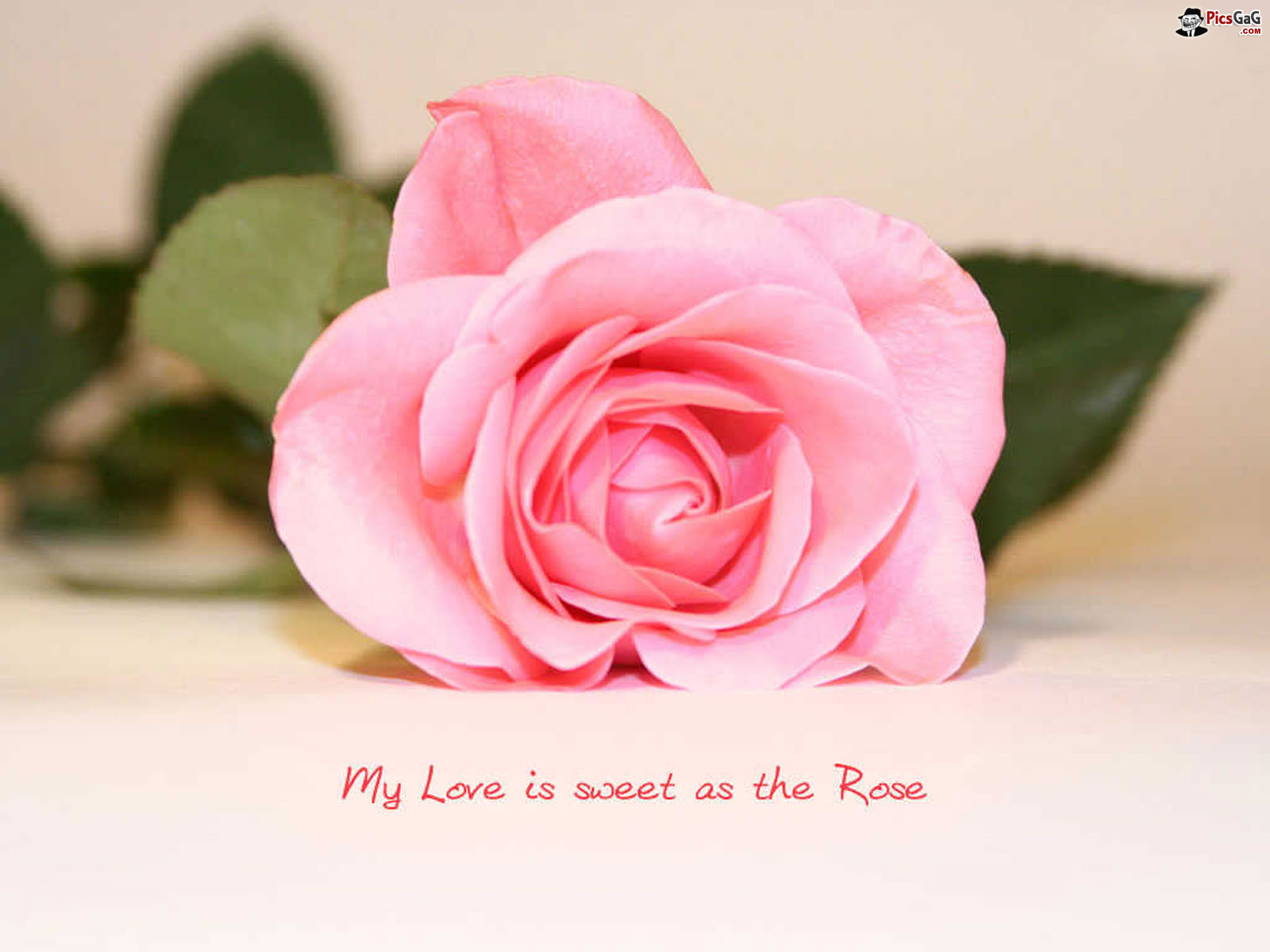 pink flowers quotes background hdflower com