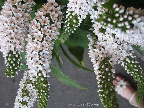 White Flowers Names And Images 2 Cool Hd Wallpaper