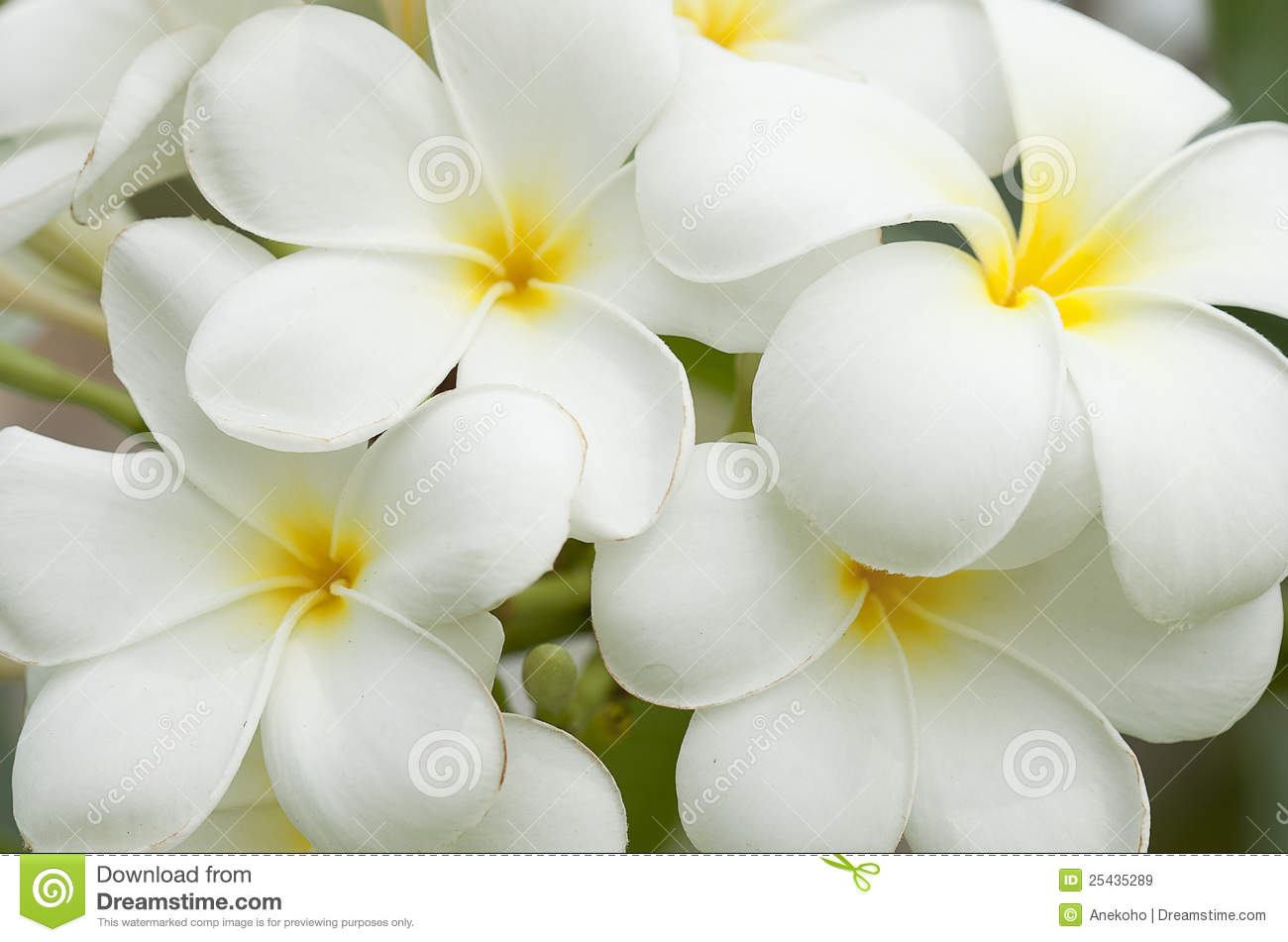 Fiori Gialli E Bianchi.White Yellow Flowers 17 Desktop Wallpaper Hdflowerwallpaper Com