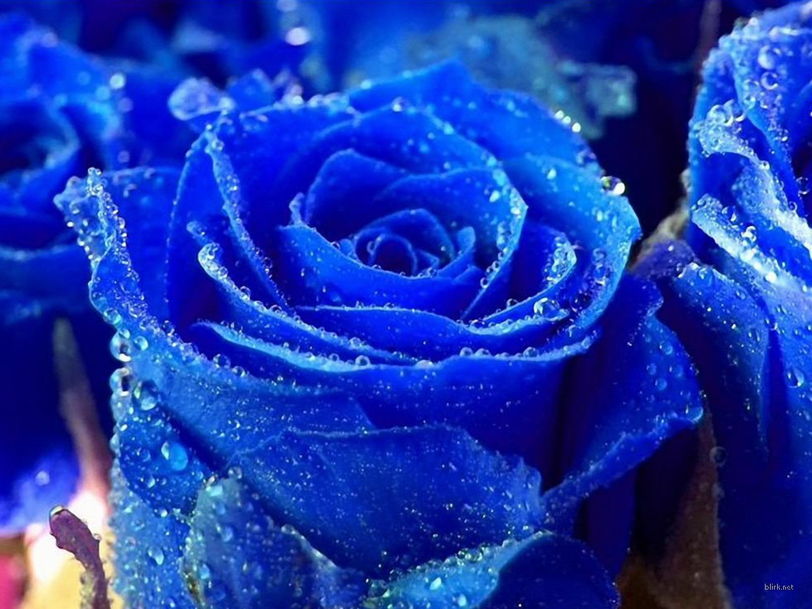 Blue Rose Wallpaper For Desktop 30 Background Hdflowerwallpaper Com