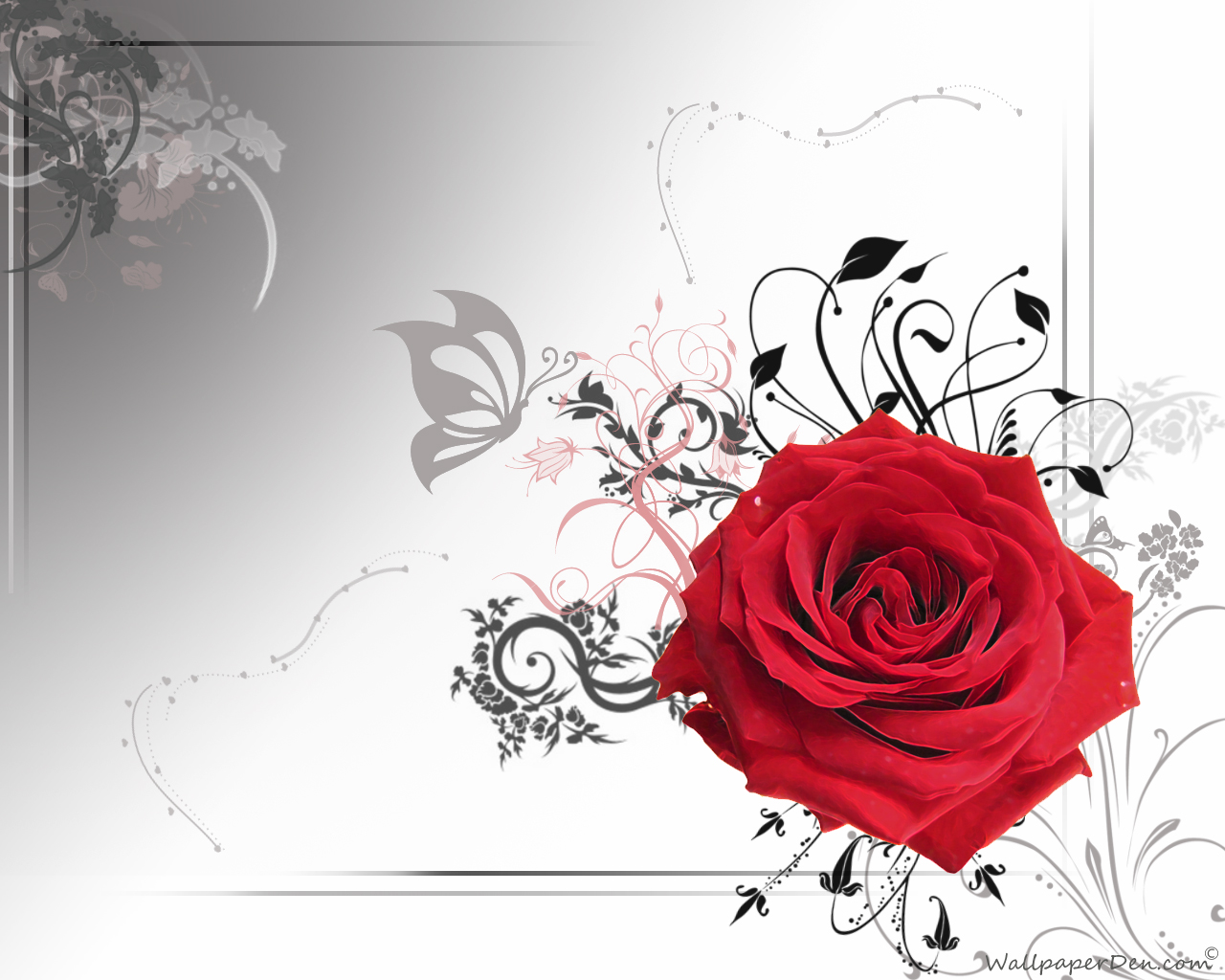 Red Rose Wallpaper Free Download 18 Hd Wallpaper Hdflowerwallpaper Com